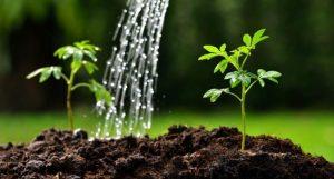 Что умеет фульвовая кислота?