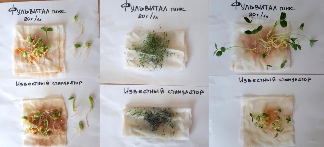 Опыт проращивания семян огурца, кабачка и моркови с Фульвитал Плюс.